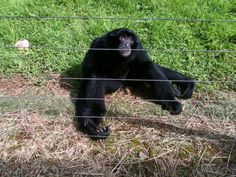 Monkey from the zoo on holiday last year #monkey #zoo