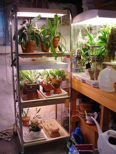Arne's Orchid Corner: February 2014