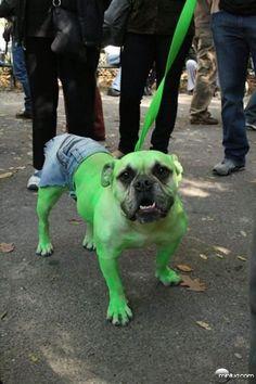 Uau!! Hulk Dog!!