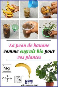 Little Gardens, Small Gardens, Most Beautiful Gardens, Amazing Gardens, Fruit Garden, Vegetable Garden, Home Made Fertilizer, Regrow Vegetables, Banana Plants