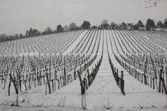Vineyard in Neuwaldweg, Austria