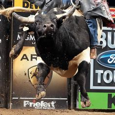 Prince Jake Rodeo Cowboys, 8 Seconds, Rodeo Life, Bull Riders, Cowboy Up, My Ride, Country Life, Prince, Hero