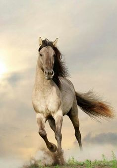 Free Spirit, horse, hest, grass, running, animal, wild, proud, clouds, furry, cute, nuttet, beautiful, photo.