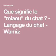 """Que signifie le """"miaou"""" du chat ? - Langage du chat - Wamiz"""