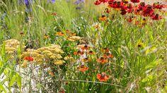 The Perennial Sanctuary Garden - RHS Hampton Court Palace Flower Show 2017 Hampton Court Flower Show, Rhs Hampton Court, Annual Flowers, Chelsea Flower Show, Worlds Largest, Perennials, Palace, Garden Design, Summertime
