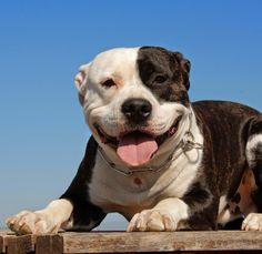Viva Feliz com seus animais de estimação!: O Animal Ideal para cada signo!!