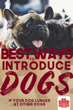 A dog that lunges at other dogs when on the leash or gets aggressive when you're out on walks can be hard to deal with and dangerous. Check out these dog training tips on how to introduce other dogs to your dog without your dog lunging or becoming aggressive. #dogs #dogtraining #meetotherdogs
