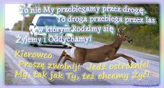 To nie My przebiegamy przez drogę. To droga przebiega przez las, w którym Rodzimy się, Żyjemy i Oddychamy. Kierowco Proszę zwolnij! Jedź ostrożnie! My, tak jak Ty, też chcemy Żyć!   http://JasnowidzJacek.blogspot.com  #przekaz, #notatka, #ulotka, #news,  #podajdalej, #animal, #zwierzęta, #natura, #przyroda, #las, #jezdnia, #kierowcy, #samochód #trasa #podróże