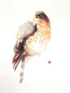 Sparrowhawk - Karl Mårtens - watercolor