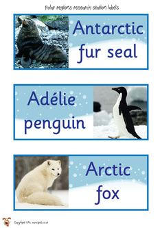 Teacher's Pet Displays » Polar Animal Labels » FREE downloadable EYFS, KS1, KS2 classroom display and teaching aid resources » A Sparklebox alternative