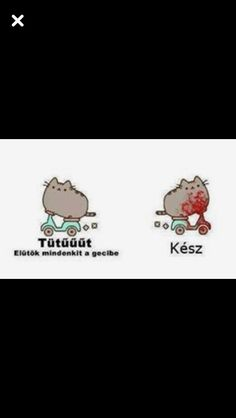Pusheen Cute, Minden, Moka, Asd, Cat Memes, Funny Moments, Puns, Funny Pictures, Projects To Try