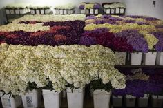 A full cooler of Stock ready for shipping at Joseph & Sons. (Photo take April California Location, Family Flowers, Delphinium, Flower Farm, Joseph, Sons, Plants, Delphiniums, My Son