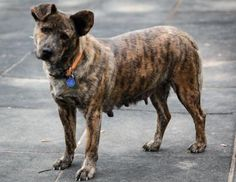 5 / 5 ***SENIOR/SPECIAL NEEDS*** Petango.com – Meet Jillian, a 7 years 4 months Shepherd / Mix available for adoption in KANSAS CITY, MO Address 9300 NW 97th Terrace , Unit, KANSAS CITY, MO, 64153 Phone (816) 298-9997 Website http://www.DogsbyDebin.com Email dogsbydebin@gmail.com