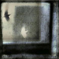 """Maria, """" I visioned it"""" Owl Calls, Abstract Photography, Cool Eyes, Mixed Media Art, Black And White, Birds, Solitude, Blur, Inspiration"""