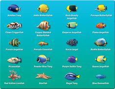 pictures of saltwater aquarium fish - Google Search