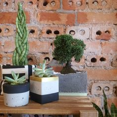 Composição de tecido com cimento.  #succulents #succulove #plants #curitiba
