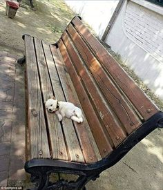 Another dog chose to get some rest whilst out and about on a public bench...