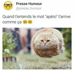 Read trio drôle from the story Images Trop Drôle( Internet) by flbibiche with reads. Funny Animal Memes, Funny Facts, Funny Tweets, Funny Animals, Funny Jokes, Cute Animals, Hilarious, Baby Animals, Funny Images