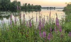 Huisvennenroute Natuurmonumenten - Ontdek de uitgestrekte heidevelden, vergezichten, bossen en vennen op de Kampina in Brabant. Wie weet sta je plots oog in oog met een ree!