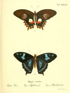 v. 2, plates - Die ausländischen Schmetterlinge in Abbildungen nach der Natur / - Biodiversity Heritage Library