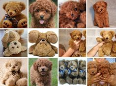 Puppy or Teddy Bear?  I'm sorry, but these are just so funny . . .  (via Paulina Tikunova/BoredPanda)