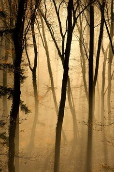 I Like It Wild And Misty...Always In The Country !... http://samissomarspace.wordpress.com