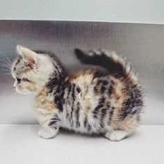 This could be your purrfect mach! Just type a name in the comments and if l think your a suitable owner l will give her to you do not pin unless l say you can adopt