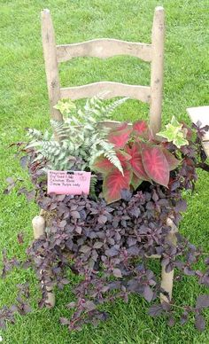 love planted chairs I would like to do one with a small armless rocking chair....