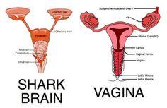 "shark brain. vagina.  my period will now be called ""Shark Week""."