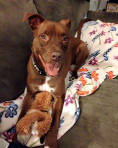 Victoria QueenCT Lost Pets October 28 ·    Found this sweet pit mix lost in Seymour, CT on 10/28/15 please share  Like · Comment · Share Top Comments 2 people like this. 50 shares Comments  Victoria Queen Owner has been found and pup returned home! Thanks everyone smile emoticon Like · Reply · October 29 at 8:44pm