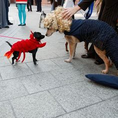 Sea Dogs. #Halloween #DIY costumes for pets