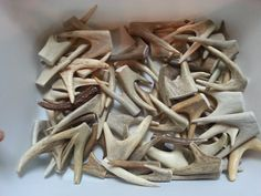 1 Drilled Antler point ** PLEASE NOTE: Due to popularity of this item, there is a one week lead time. Please allow a little extra time. Thanks! **  *NO RUSH SERVICE AVAILABLE ON THIS ITEM.*  Twin tipped antler point. Top drilled in your choice of style. Top edge is sanded. Assorted colors and shapes. Some will be white with slight cracks up to solid dark brown. Great for key chains, pendants, rosaries, light pulls and more.  SIZES: TWO- Between 1 and 2 inches long THREE- Between 2 and 3…