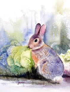 Matted PRINT of Rabbit in Cabbage Patch from by AllNatureSings, $15.00
