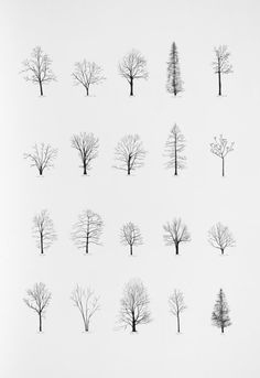 """Katie Holten has made a series of tree drawings. In 2015 she created a """"Tree Alphabet"""" and published the book """"About Trees"""". A series of tree drawings was commissioned by the Zentrum Paul Klee for the group exhibition """"About Trees"""" in Drawn Art, Hand Drawn, Photoshop, Art Plastique, Painting & Drawing, Drawing Trees, Life Drawing, Trees Drawing Simple, Drawing Drawing"""