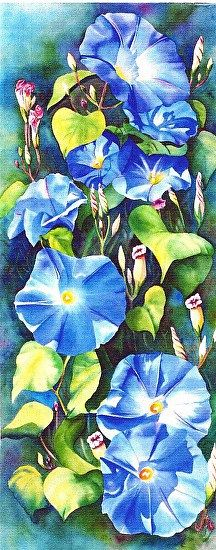 Morning Glories 001 by Suzanne  Shaffer  ~  x