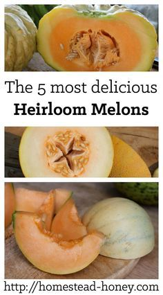 Ready to give melon growing a try? These are my top picks of five of the most delicious heirloom melons to plant in your garden this summer Homestead Honey Growing Melons, Growing Herbs, Growing Vegetables, Fruits And Veggies, Fruit Garden, Edible Garden, Garden Plants, Organic Gardening, Gardening Tips