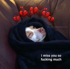 Freaky Memes, Stupid Funny Memes, Funny Relatable Memes, Cute Love Memes, Cute Quotes, Missing You Memes, I Miss You Memes, Gf Memes, Flirty Memes