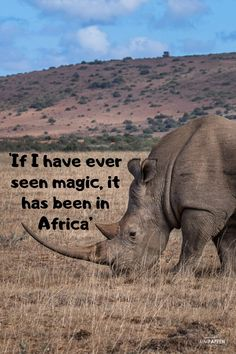 Africa travel quotes can help inspire you to see the world. Check out these top inspirational quotes about safari from famous explorers & writers! Hiking Quotes, Travel Quotes, Africa Quotes, Safari, New Adventure Quotes, Africa Travel, Traveling By Yourself, Inspirational Quotes, Inspire