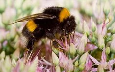 Bees are drawn to flowers by an invisible electric field as well as their bright colours, a new study has shown. Australian Spider, Electric Field, Bee Friendly, Busy Bee, Bee Keeping, Ants, Close Up, Fields, Insects