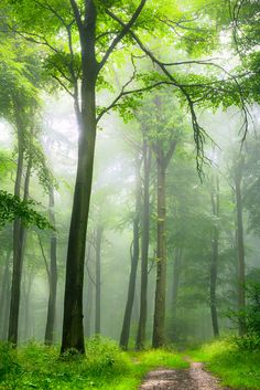~~Bright Forest | a foggy Halton Camp, England, UK by Starting Out...~~