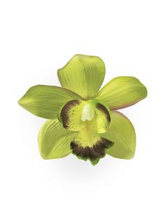 Green Orchid Pin Up Hair Clip Small