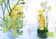 #Counter #Dekoration #Orchideen #Cymbidien #Kängurupfoten #Glas #Zylinder