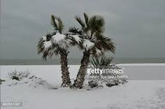 Image result for snow on palm trees