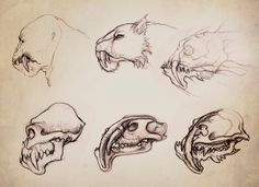 concept art sabretooth skull sketch