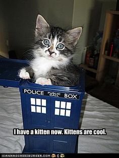 Dr Who Kittens are cool