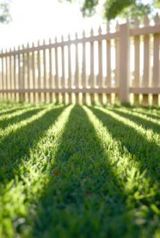 Green Lawn Tip