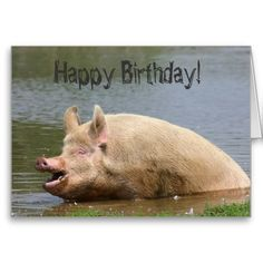 ==> reviews          	Greedy pig Birthday Greeting Cards           	Greedy pig Birthday Greeting Cards We provide you all shopping site and all informations in our go to store link. You will see low prices onDeals          	Greedy pig Birthday Greeting Cards Here a great deal...Cleck See More >>> http://www.zazzle.com/greedy_pig_birthday_greeting_cards-137259819787092487?rf=238627982471231924&zbar=1&tc=terrest