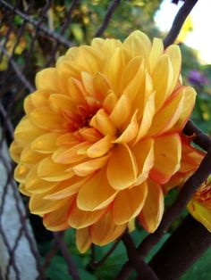 Herbst in der Gartenanlage 19