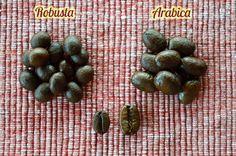 Rozdiel medzi zrnkami Arabica a Robusta.