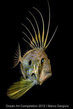 In Images: 'Alien' Creatures Take Center Stage in Underwater Photo Contest Underwater Creatures, Underwater Life, Underwater Photos, Underwater Photography, John Dory Fish, Deep Sea Creatures, Alien Creatures, Fauna Marina, Marine Fish